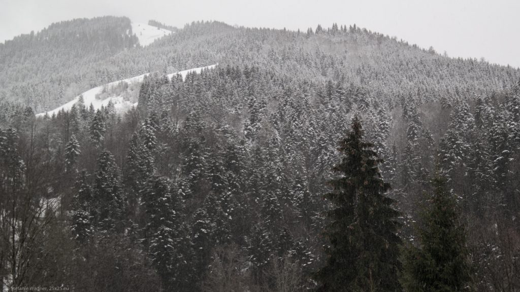 Forest showing the snow line