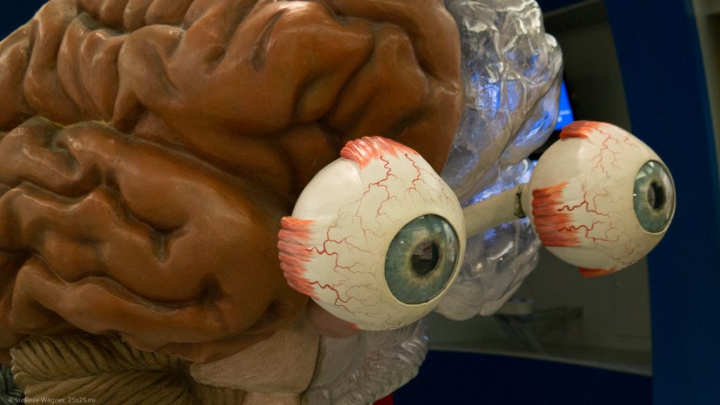 Model of a brain with eyes