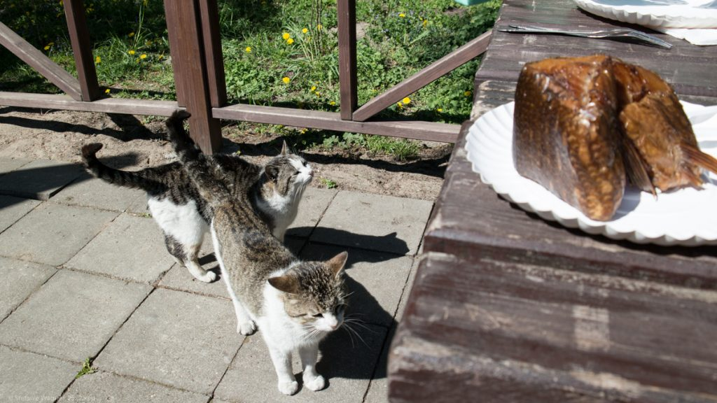 Cats around the table with the smoked fish on the table.