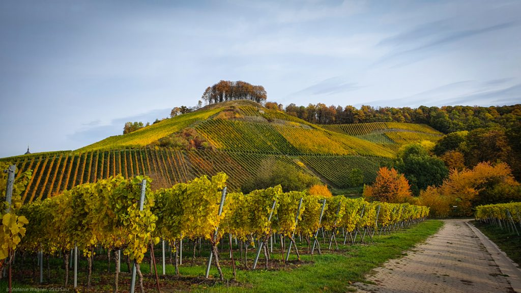 View across vineyards