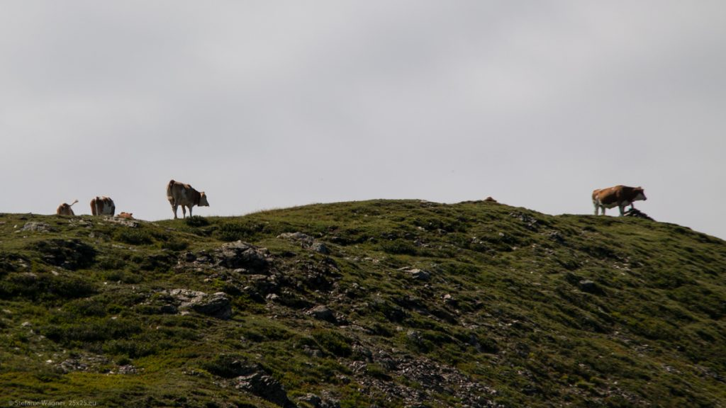Several cows on a peak in some distance