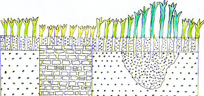 Diagram showing crop growth with a wall and a ditch