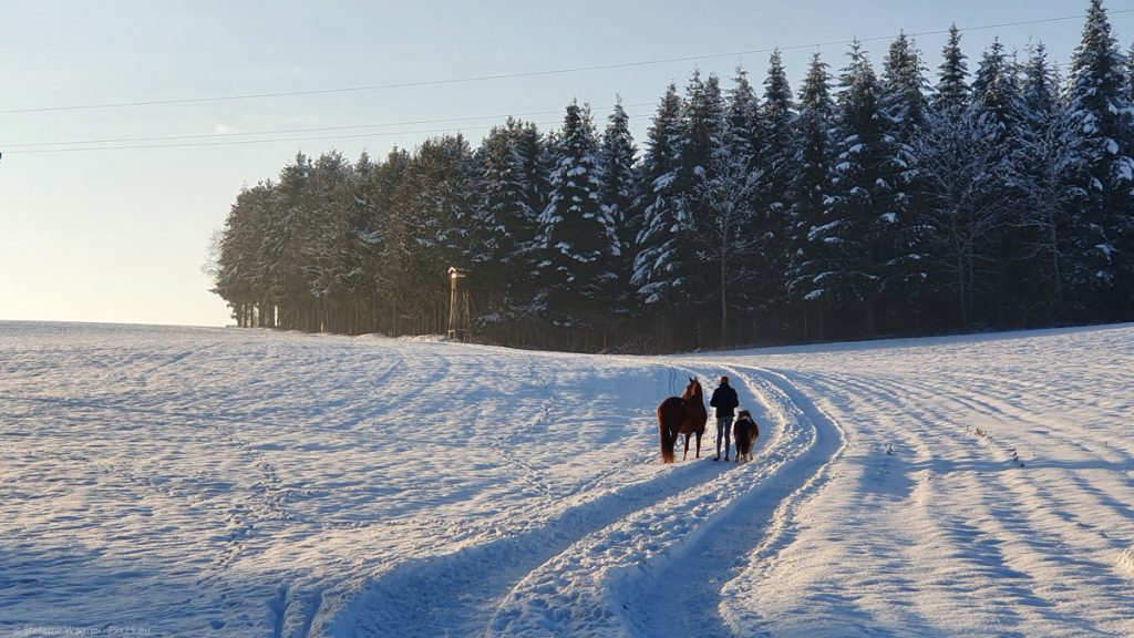 Snow covered path with a person in between a horse and a pony walking along that path