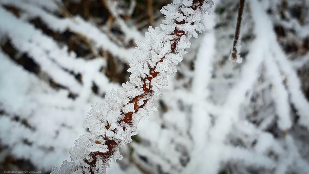 Ice crystals on a small branch