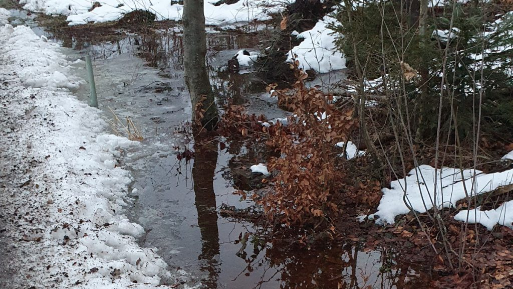 Water from melted snow makes a big puddle, tree standing in it