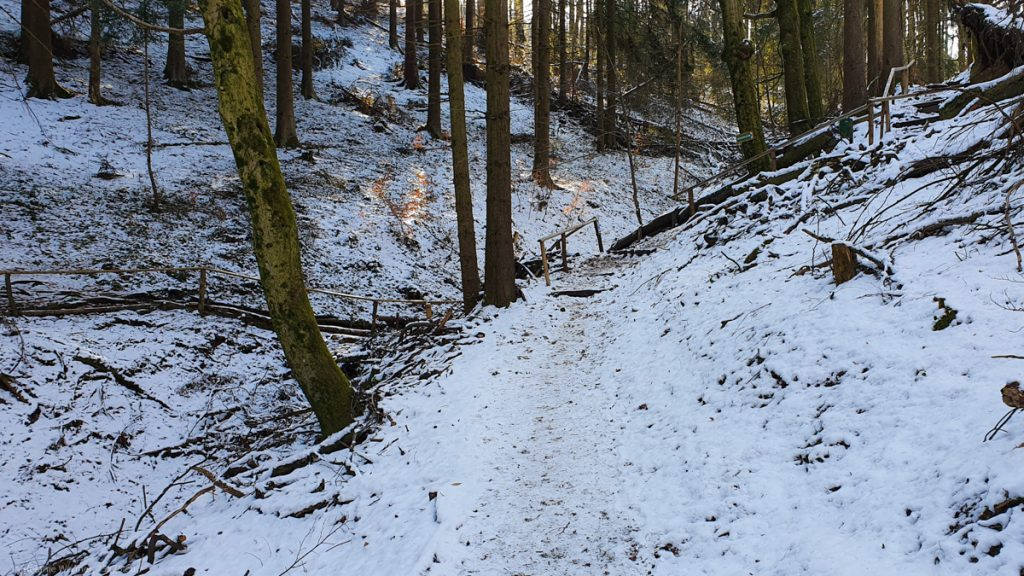 Forst path all covered with snow