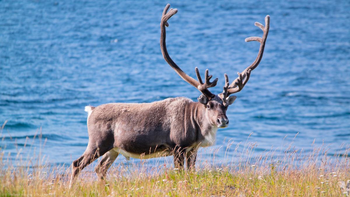 Norway Road Trip 2021